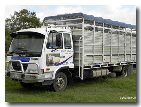 Charbray Cattle